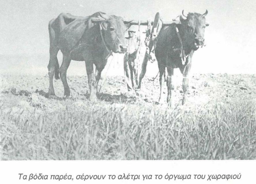 orounta1990_15